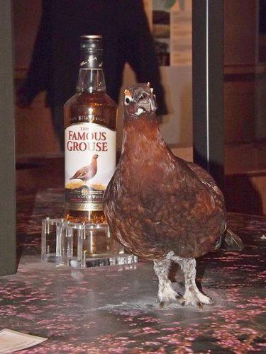 あの有名な雷鳥をくれ。『フェイマスグラウス The Famous Grouse』!そのストーリーと特徴を解説